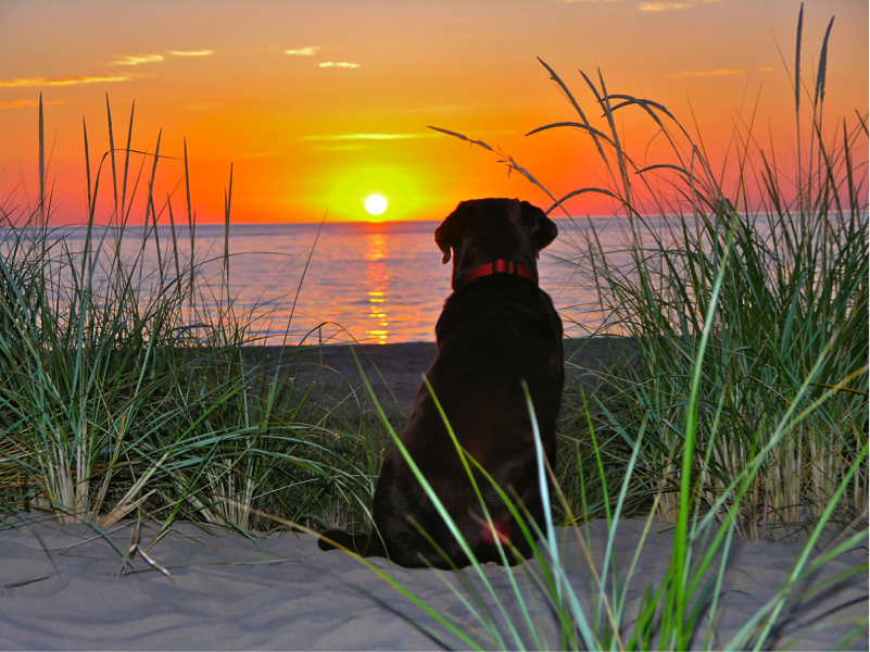 Ms. Barthel's dog Shadow on the beach in Michigan. Photo courtesy of: Ms. Barthel
