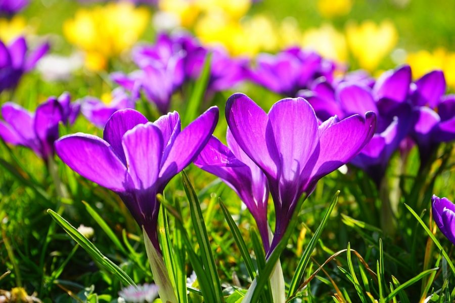 Spring+Fest+Haiku